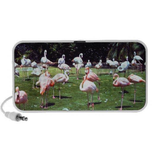 Doodle Speaker with San Diego Zoo Flamingos
