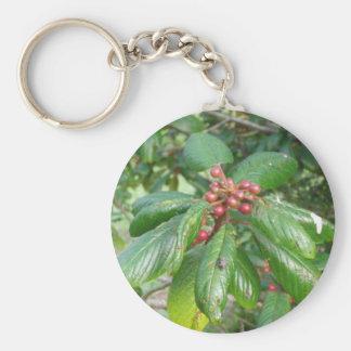 Door-keys Buckthorn Basic Round Button Key Ring