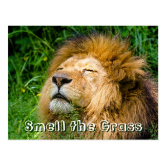 Dope Lion in the grass Postcard