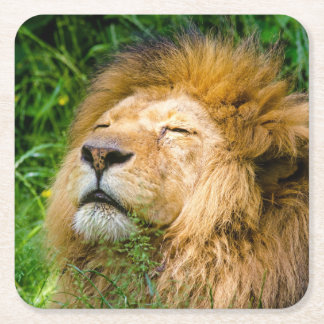 Dope Lion in the grass Square Paper Coaster