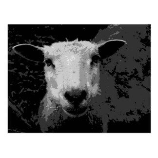 Doris the sheep postcard