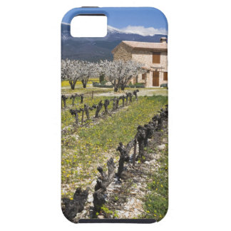 Dormant vineyard, fruit blossoms, stone house, iPhone 5 cover