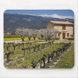 Dormant vineyard, fruit blossoms, stone house, mouse pad