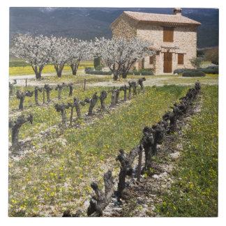 Dormant vineyard fruit blossoms stone house ceramic tile