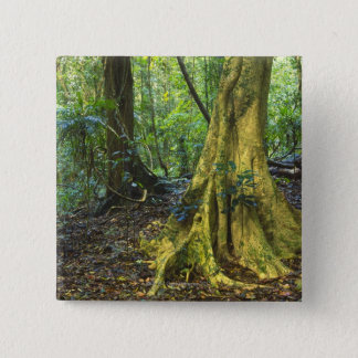 Dorrigo National Park 15 Cm Square Badge