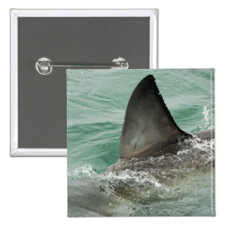 Dorsal aileron of a Great White shark 15 Cm Square Badge