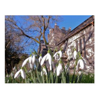 Dorset Snowdrops postcard