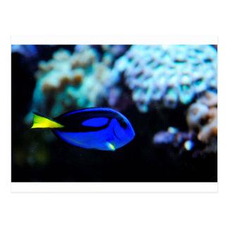 Dory , Blue Tang Fish Postcard