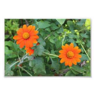Dos Flores Chinas Photo Print