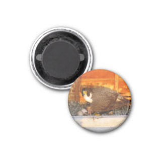 Dot.ca and Orion Magnet