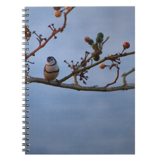 Double-barred finch on branch notebooks