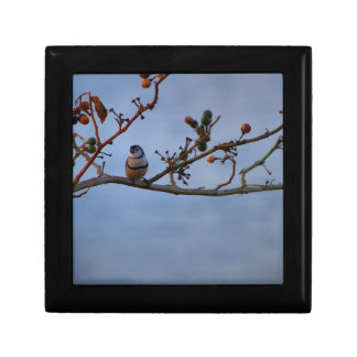 Double-barred finch on branch small square gift box