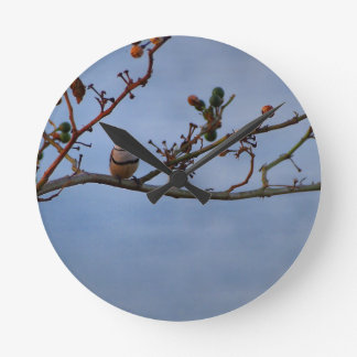 Double-barred finch on branch wall clock