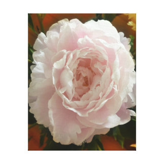 Double-bloom pink peony on vintage warm background canvas print