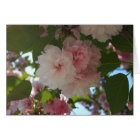 Double Blossoming Cherry Tree I Spring Floral Card