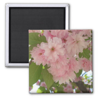 Double Blossoming Cherry Trees II Pink Spring Square Magnet
