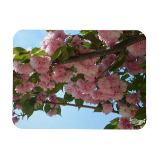 Double Blossoming Cherry Trees IV Pink Spring Rectangular Photo Magnet