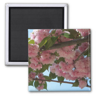 Double Blossoming Cherry Trees IV Pink Spring Square Magnet
