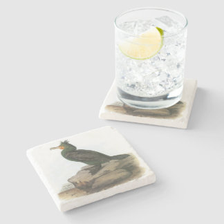 Double-crested Cormorant by Audubon Stone Coaster
