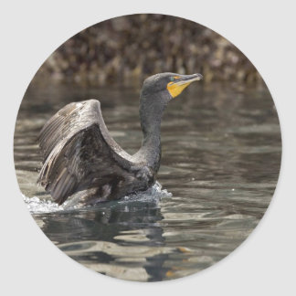 Double-crested Cormorant, Castle Rock, Shumagin Is Classic Round Sticker