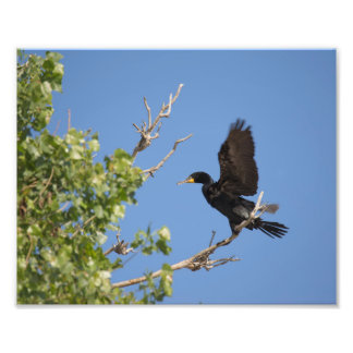 Double Crested Cormorant in Tree Photo Print
