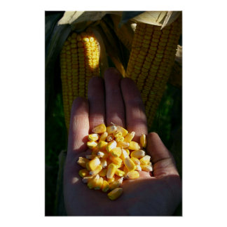 double crop corn poster