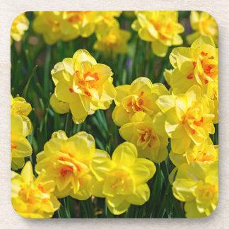 Double Daffodils Coaster