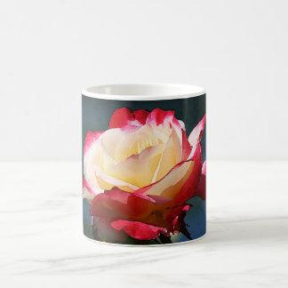 'Double Delight' hybrid tea rose Coffee Mug
