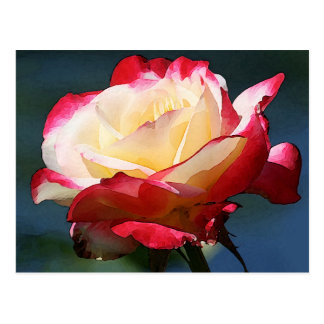 'Double Delight' hybrid tea rose Postcard