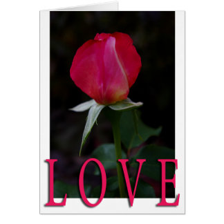 double delight rose bud love card