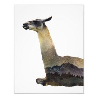 Double Exposure Llama Photo Print