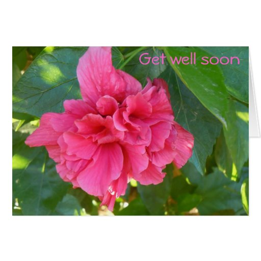 Double Hibiscus Get well card