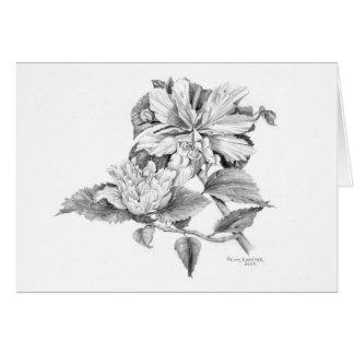 Double Hibiscus in pencil Card