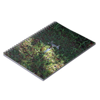Double outlet water spigot notebooks