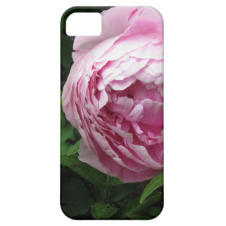 Double Pink Peony - Photograph iPhone 5 Cover