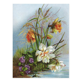 Double White and Gold Narcissus By a Pond Postcard