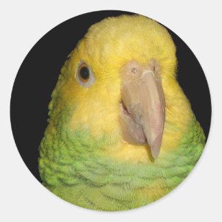 Double Yellowhead Amazon Parrot Round Sticker
