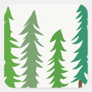 Douglas Fir Trees Square Sticker