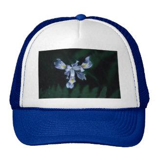 DouglasIris Hats