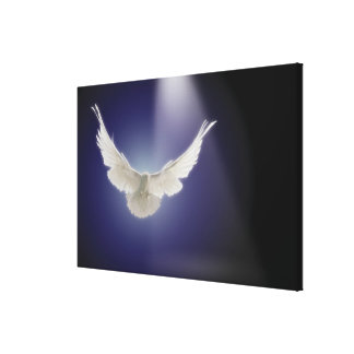 Dove flying through beam of light canvas print