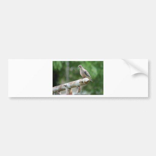Dove on a Post Bumper Stickers