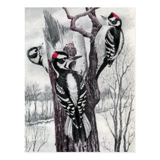 Downy and Hairy Woodpeckers in Winter Postcard