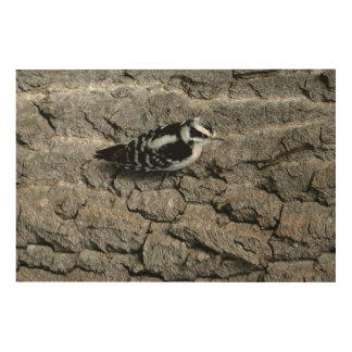 "Downy Woodpecker 36""x24"" Wood Wall Art"