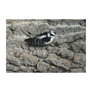 Downy Woodpecker 60 x 40 Wrapped Canvas