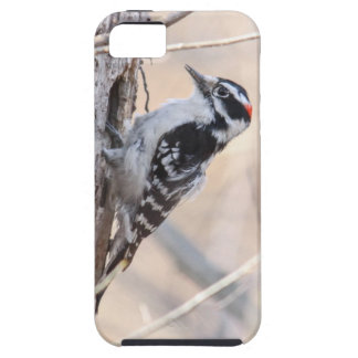Downy Woodpecker iPhone 5 Cases