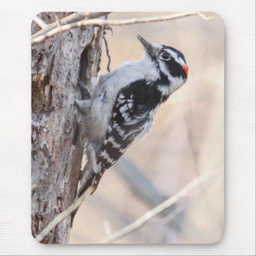Downy Woodpecker Mousepads