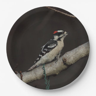 Downy Woodpecker, Paper Plates. Paper Plate