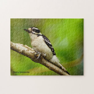 Downy Woodpecker Puzzle