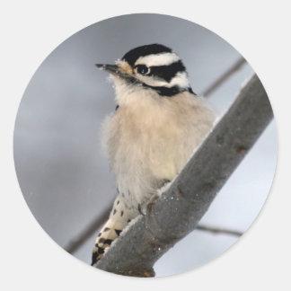 Downy Woodpecker Stickers