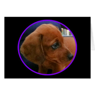 Doxie pup notecard